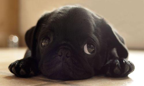 Şirin yavru köpek - Şirin Kapak Fotoğrafları - Sevimli Ve Tatlı Kapak Resimleri, komik-sozler, guzel-sozler