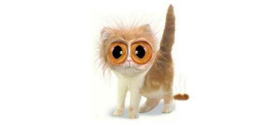 pörtlek gözlü kedi - Şirin Kapak Fotoğrafları - Sevimli Ve Tatlı Kapak Resimleri, komik-sozler, guzel-sozler