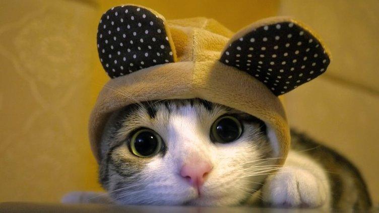 yavru tatlı kedi - Şirin Kapak Fotoğrafları - Sevimli Ve Tatlı Kapak Resimleri, komik-sozler, guzel-sozler