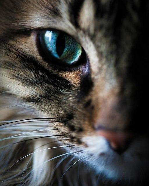 Whatsapp Durum Mesajları 38 - Hayvanlar İle İlgili Resimli Sözler - Hayvanlar İle İlgili Sözler, resimli-sozler